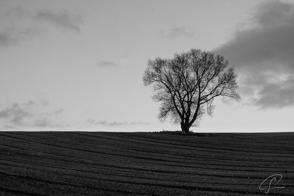 A tree in winter